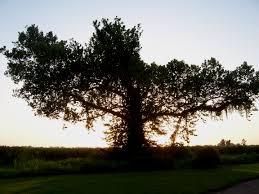 cross tree by onlyanewcliche on deviantart