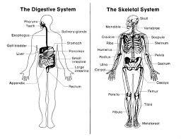all worksheets digestive system worksheets free printable