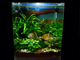 Most Beautiful Aquascapes Aquatic Gardening Nano Style Full Article Details Articles