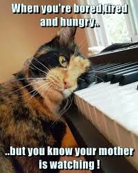Tired Cat Meme - when you re bored tired and hungry lolcats lol cat memes