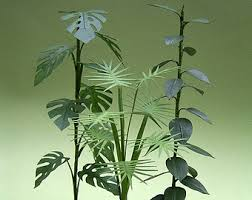 indoor plants etsy