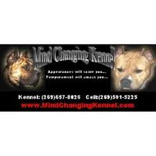 american pitbull terrier kennels in michigan mind changing kennel american pit bull terrier breeder in paw paw