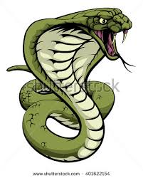 cobra stock images royalty free images vectors