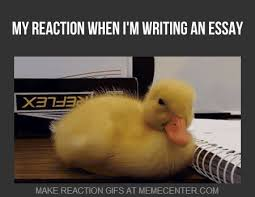 Writing Meme - essay writing meme