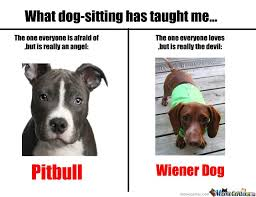 Pitbull Meme - pitbulls and wiener dogs wiener dogs dog and pit bull