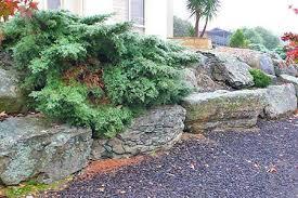 Japanese Rock Garden Supplies Moss Rocks Supplies Adelaide Seat Rocks Spillways Flagstones