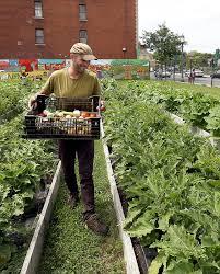 Benefits Of Urban Gardening - environmental benefits urban agriculture