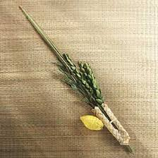 etrog for sale deluxe lulav and etrog set etrog mehudar source the