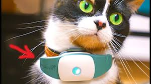 Gadgets For Pets 6 Useful Gadgets For Cats Youtube