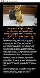 si e psa na peronie w ayr w szkocji pasażerowie mijali spokojnie czekającego