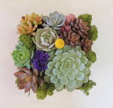 succulent arrangements succulent gift arrangement in wooden box