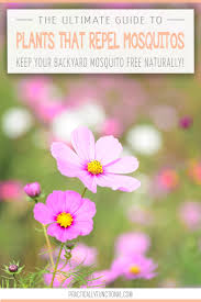 plants that keep mosquitoes away the ultimate guide 34 plants that repel mosquitos naturally
