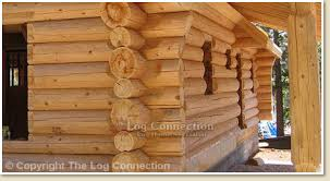 wood species used in stacked log homes