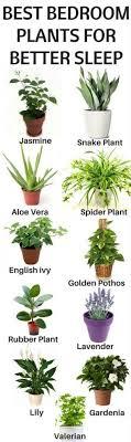 best plants for bedroom best plants to keep in your bedroom to help you sleep home gardeners