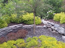 mass planting of perennials and shrubs in a rock garden dragon