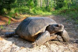 Louisiana wild animals images 12 amazing wildlife species that call louisiana home jpg