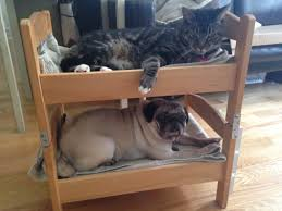 Doggie Bunk Beds Can A And A Cat Be Bunk Bed Mates Seems So Ikea Hackers