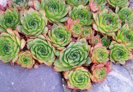 Patio Plants For Sun Container Garden Ideas 8 Plants For Your Front Porch Bob Vila