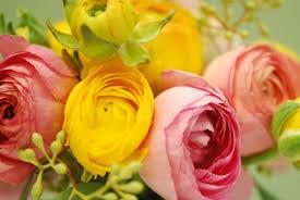 simple beauty ranunculus u2013 start a easy spring backyard flower
