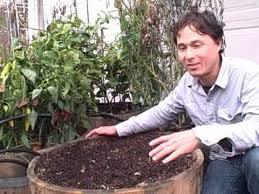 planting 45 garlic cloves in a half wine barrel container garden