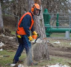 testimonials chain saw safety specialists
