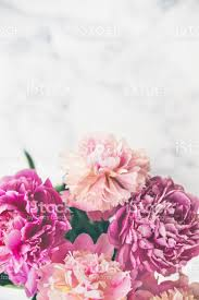 peonies bouquet pink peonies bouquet on marble background stock photo more