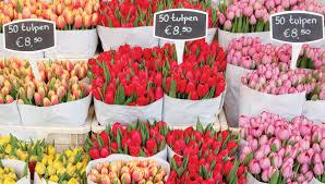 flowers of amsterdam i amsterdam