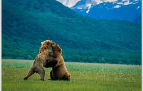 Alaska wildlife tours images Best alaska wildlife viewing experiences jpg