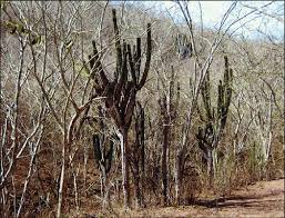 tropical deciduous forest has dense slender trees with whitish