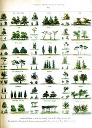different types of trees henry s home tree facts