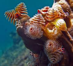 5 cool types of marine worms