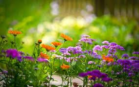 beautiful garden 6775161
