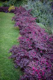 Flowering Shrubs For Partial Sun - flowering shrubs zone 5 part sun best flower in the word 2017