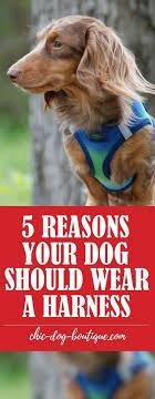 68 best Dog Walking images on Pinterest