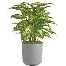 plant decor inc plant selections