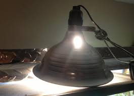 Reptile Heat Lamps Safety by A Word On Heat Sources And Burning Your Animals Treatment Info
