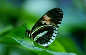 black and white butterfly on green leaf during daytime free