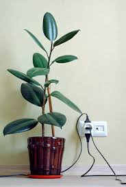 10 common houseplants and how to take care of them zing blog by