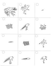 frog life cycles picmia