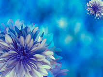turquoise flowers flower on blue turquoise background white blue flower