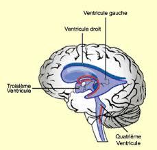 si e des motions dans le cerveau le cerveau à tous les niveaux