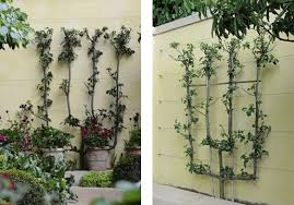 Stainless Steel Cable Trellis Bunny Guinness M U0026g Garden Green Wall Cable Trellis S3i Com