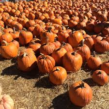 Pumpkin Picking Places In South Jersey by 20 Apple Picking Farms Pumpkin Patches And Cider Mills In The