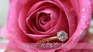 rose day images for whatsapp dp profile wallpapers u2013 free