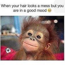 Funny Monkey Meme - funny monkey pictures with quotes gendiswallpaper com