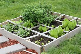 how to start a vegetable garden for beginners how to start a vegetable garden for beginners