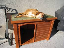 Small House Dogs Tips Build Insulated Small Dog House Best House Design