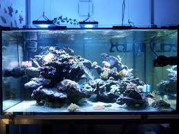 démarrage d u0027un nouvel aquarium récifal de 837 litres après l u0027arrêt