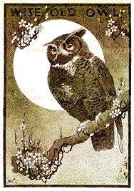 wise old owl halloween vintage illustration book scan