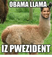 Llama Meme - obama llama zpwezident meme on me me